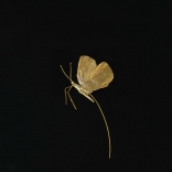 Gold butterfly broach with a long pointed tail, made by Greek contemporary artist Eleni Kolaitou of the Greek art gallery, AK in Santorini